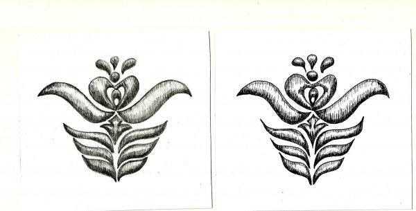 4_tulipán