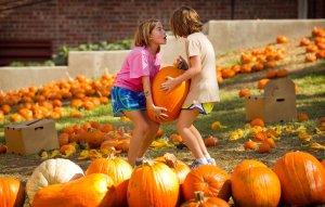 jwj-pumpkins-023