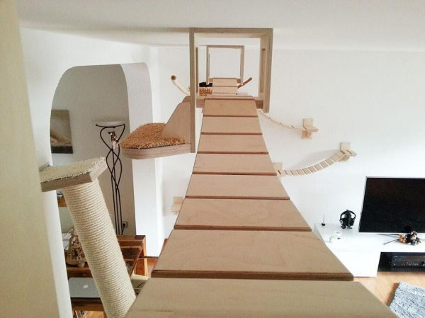 funny-overhead-cat-playground-room