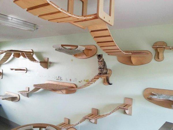 funny-overhead-cat-playground-room-Goldtatze