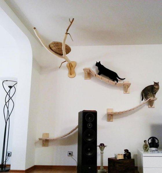 funny-overhead-cat-playground-room-Goldtatze-speakers